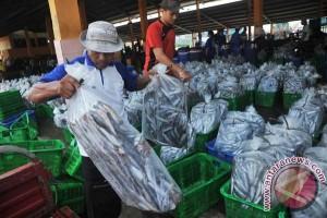 OJK: sektor perikanan makin menarik bagi perbankan