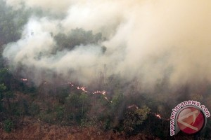 Bank Dunia: kebakaran hutan perlambat pertumbuhan Indonesia