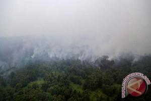10 hektare hutan di Gunung Wilis terbakar