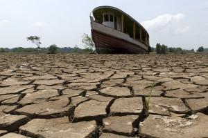 Brazil akan pulihkan 12 juta hektar hutan