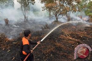 Sudah 3.532 hektare Gambut di Kotawaringin Timur terbakar