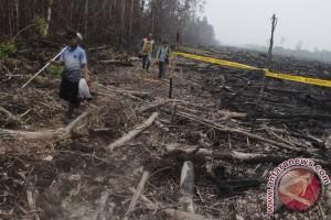 Walhi minta pemerintah moratorium pembukaan lahan rawa