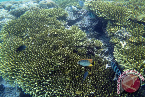 Protection of Indonesian coral reefs still needed