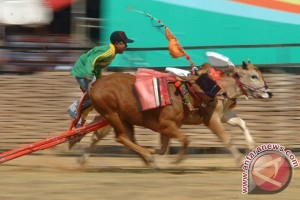 Tari Pecot awali lomba karapan sapi Piala Presiden