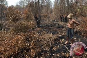 Pengelolaan seluruh lahan gambut terbakar kembali ke negara