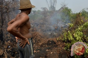 EARTH WIRE -- Peatland restoration helps prevent forest fires