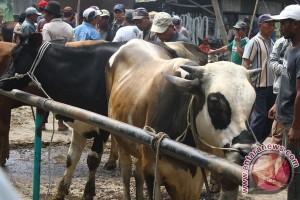 Lima provinsi siap pasok sapi ke DKI