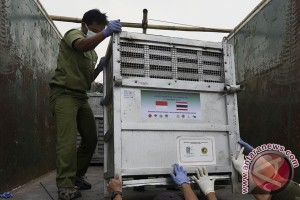 TSI Bogor karantina 14 orang utan dari Thailand
