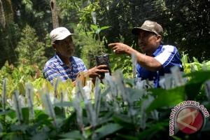 Pemprov Sulbar targetkan kualitas kakao Sulbar terbaik di dunia