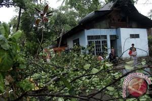 Lima bangunan rusak tertimpa pohon tumbang di Sumbar