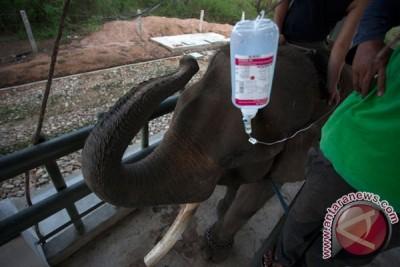 WARTA BUMI -- Festival untuk para gajah