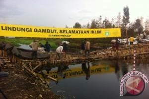 Greenpeace restorasi gambut di Pulang Pisau