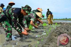 TNI Mendukung Swasembada Pangan