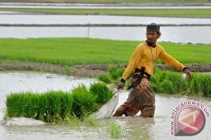 Kementan dorong petani percepat tanam padi