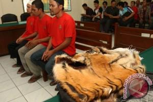 Sidang Perdagangan Kulit Harimau