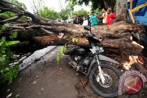 Pohon tumbang di Yogyakarta memakan korban