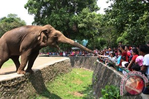 President Jokowi committed to revitalizing two zoos