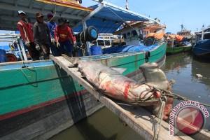 Spesies hiu di Indonesia terancam punah