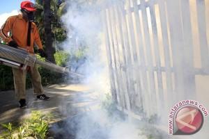 Enam warga Tabalong meninggal karena DBD
