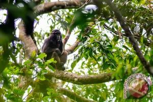 Kuburan monyet gegerkan warga dan polisi
