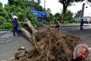 Pohon Tumbang