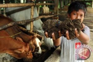 Dosen IPB kembangkan pakan ternak dari limbah