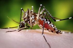 Kemenkes: jentik nyamuk tidak hilang hanya dikuras