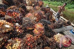 Menteri perindustran ingin ekspor CPO ke Perancis lancar