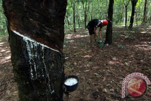 Puluhan pekerja perkebunan Temanggung kena Cikungunya