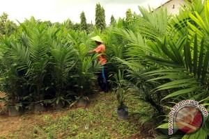 Jambi dapat bantuan replanting 4.000 hektare sawit