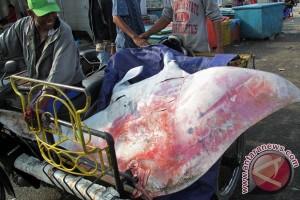 DKP-WWF sosialisasi pengelolaan hiu, pari di perairan NTT