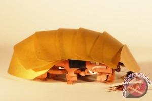 Kecoak menginspirasi pembuatan robot