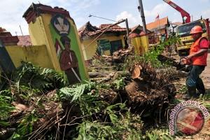 Hujan deras sebabkan pohon tumbang di Bantul
