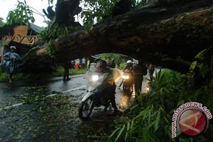 Dua wisatawan tertimpa pohon di Garut