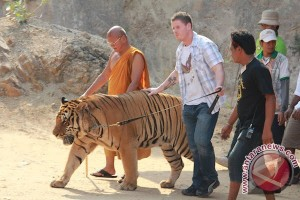 Thailand`s infamous Tiger Temple fights to keep big cats