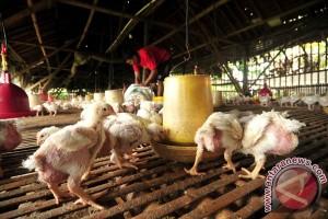 Pemerintah keluarkan harga patokan ayam