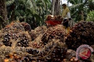 Perusahaan kelapa sawit komitmen cegah karhutla