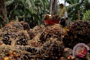 Indonesia ajak ASEAN lawan kampanye hitam sawit