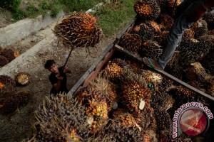senegal undang Indonesia bangun pabrik penyulingan kelapa sawit