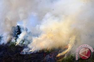 TNI AD tangkap tangan pembakar lahan di Kampar