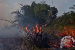 BMKG deteksi satu titik api di Rokan Hilir