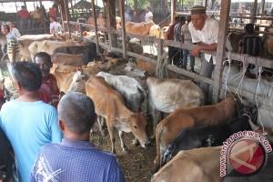 Pekanbaru siagakan pos pemantau sapi
