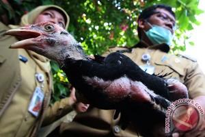 Indonesia diakui mampu kendalikan flu burung