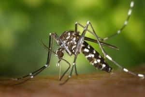 Spanyol konfirmasi 58 kasus infeksi Zika