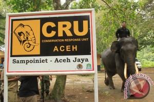 Aceh gunakan gajah untuk atasi gangguan gajah liar