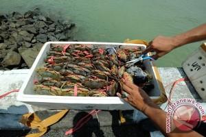 Karantina perikanan Jambi sita belasan ekor kepiting