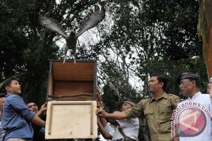 PKEK lepasliarkan dua elang di Hutan Kamojang