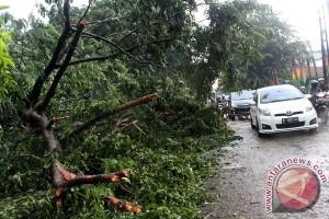 Pengendara motor tertimpa pohon tumbang di Kalimalang