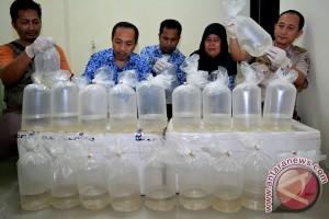 Pengiriman 24.500 benih lobster digagalkan petugas Bandara Lombok