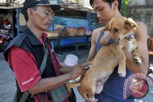 Dinas: sebaran gigitan anjing rabies meluas di Kalbar